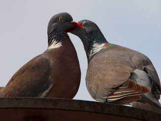 Flirt Signale erkennen und deuten